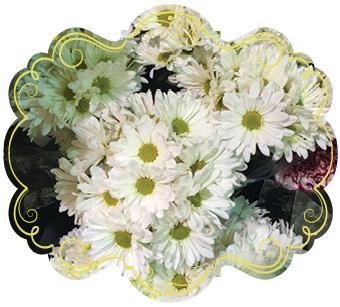 flowerPowerDaisies