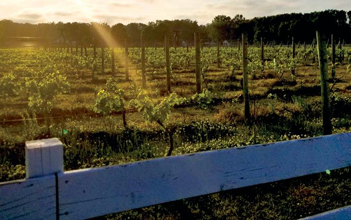 hope_and_glory_vineyard
